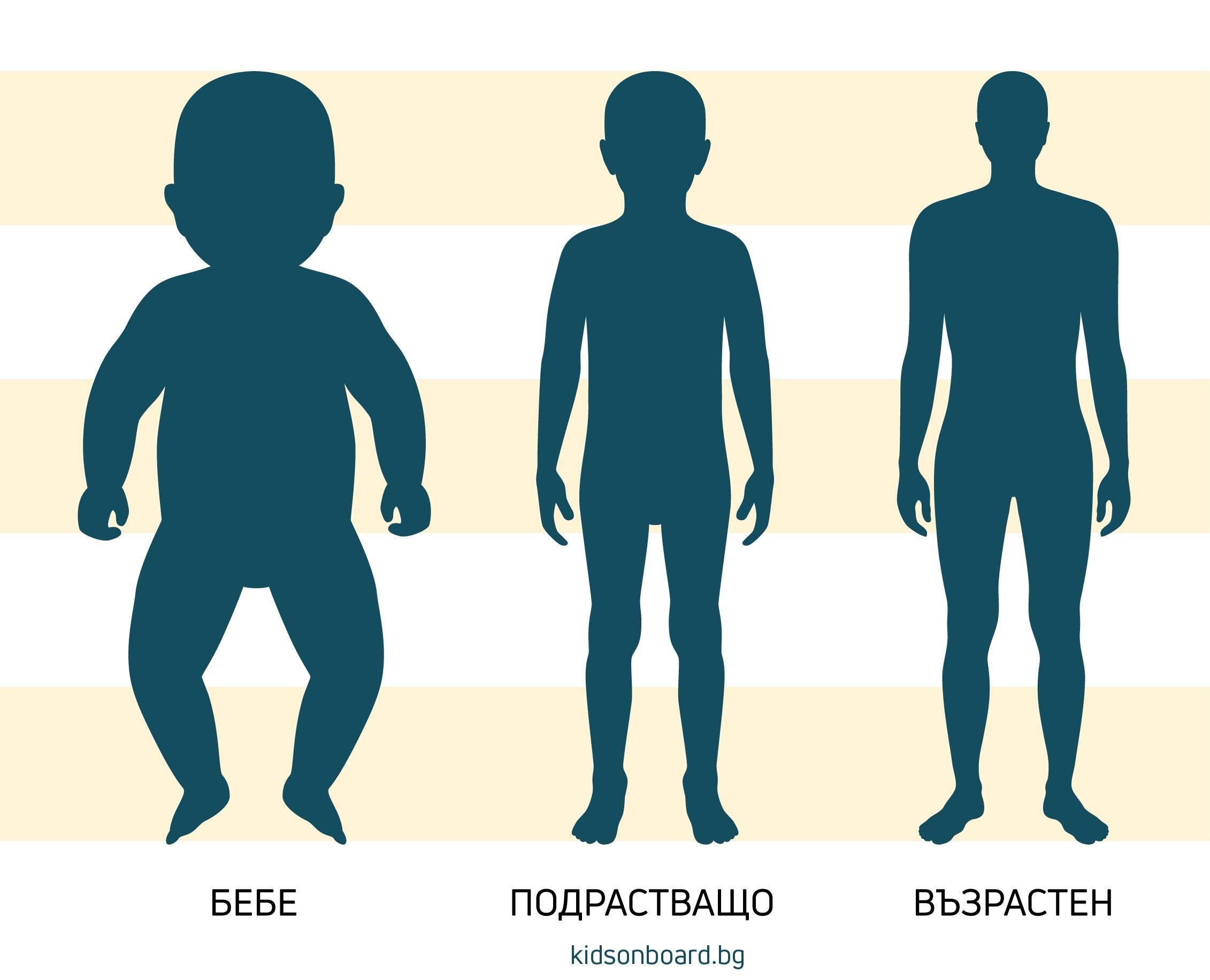 пропорции на тялото